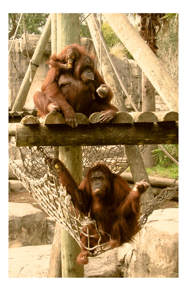 monkeying around phot by greg dampier by Greg Dampier - Illustrator & Graphic Artist of Portland, Oregon