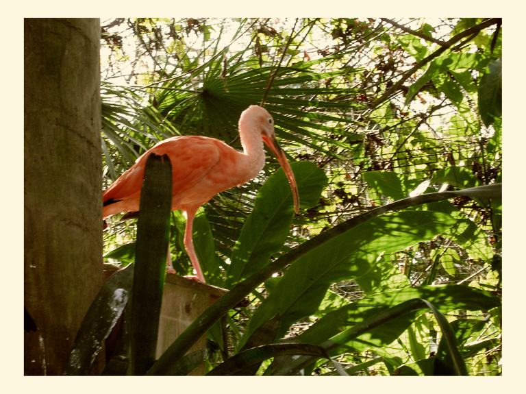 pink bird at the tampa zoo photo by greg dampier by Greg Dampier - Illustrator & Graphic Artist of Lake Wales, Florida