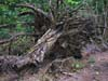 Photography • Stump Photo by Greg Dampier All Rights Reserved.