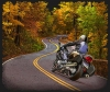 T Shirts • Vehicle Related • Winding Roads Motorcycle by Greg Dampier All Rights Reserved.