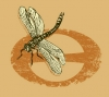 Branding • Eco Dragonfly by Greg Dampier All Rights Reserved.