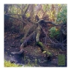 Photography • Groot Looking Tree Photgraph by Greg Dampier All Rights Reserved.