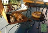 Photography • Kittens On The Porch by Greg Dampier All Rights Reserved.