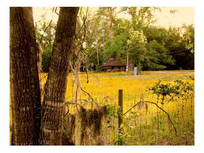 field in north florida  by Greg Dampier - Illustrator & Graphic Artist of Portland, Oregon