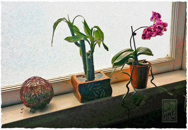 Plants in the morning window by Greg Dampier - Illustrator & Graphic Artist of Portland, Oregon