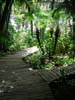 Photography • Tropical Boardwalk In Forest Photo by Greg Dampier All Rights Reserved.