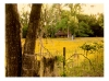 Photography • Field In North Florida by Greg Dampier All Rights Reserved.